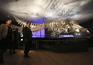 Новости науки - новости США: В музее Нью-Йорка выставили четырехлапого предка кита, жившего на суше
