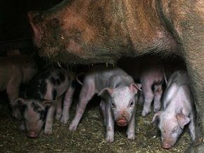 Партия регионов потребовала от Кабмина предотвратить распространение свиного гриппа