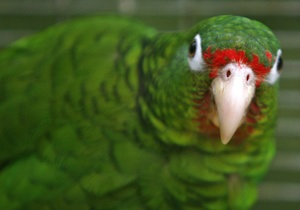 Новости Великобритании - странные новости: Британец отсудил у ВВС компенсацию за смерть попугая