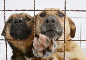 Житель Днепропетровской области, стреляя по бродячим собакам, случайно убил свою падчерицу