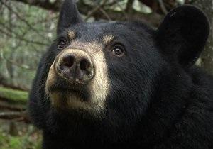 Американка испугала медведя своим криком