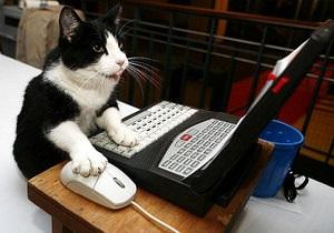 В США пройдет первый в мире кошачий кинофестиваль