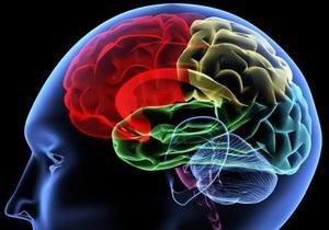 Ученые определили отделы мозга, отвечающие за уровень интеллекта
