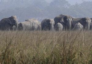 В Индии поезд сбил пять слонов