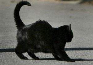 В Житомирской области из-за бешеного кота в одном из сел объявили карантин