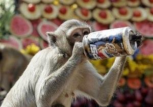В Японии создали специальный штаб для поимки обезьяны