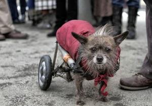В Запорожье прошли соревнования среди бездомных собак
