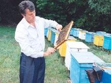 Ющенко подарил 24 детдомам по ведру меда с личной пасеки