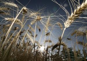 В Украине ухудшается состояние посевов озимых