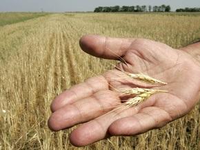 Египетским мукомолам не нравится качество украинской пшеницы