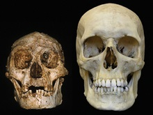 В Тихом океане обнаружили скелеты карликовых людей