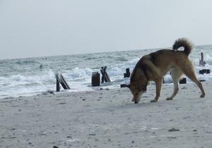 На всех пляжах Одессы запретили купаться