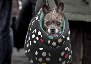 В Харькове начали штрафовать безответственных хозяев домашних животных