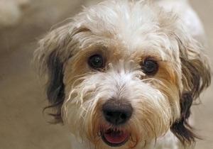 В Британии 13 собак умерли при загадочных обстоятельствах после прогулки вокруг озера