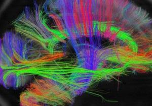 Ученые создали самую подробную карту мозга человека