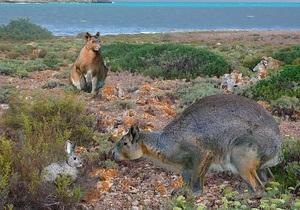 В Испании обнаружили останки гигантского кролика