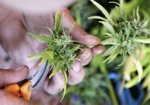 Гражданам Швейцарии разрешили выращивать марихуану для собственных нужд