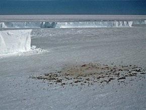 Колонии пингвинов в Антарктике исследуют по снимкам их экскрементов из космоса