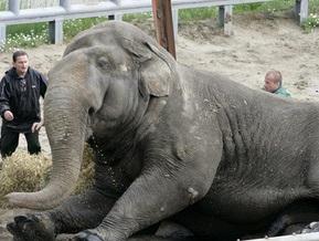 Диета пошла на пользу слону Черновецкого