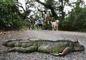 Во Флориде из-за морозов гибнут игуаны, крокодилы и питоны