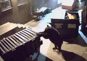 Новости США - новости о животных - странные новости: В Колорадо медведица дважды  угнала  из ресторана контейнеры с остатками еды