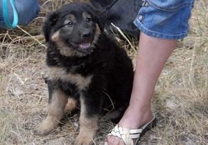В Виннице бездомным собакам выделили 45 дней на поиски хозяина, после животных усыпят