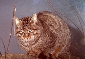 Для дикого лесного кота в Киевском зоопарке нашли самку