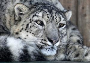 В Москве цирковой леопард набросился на ребенка