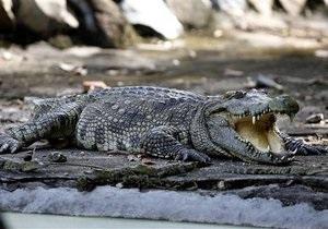 В Австралии жители дома обнаружили в гостиной крокодила