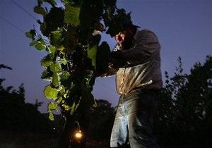 Грузинские виноделы готовятся покорять российский рынок