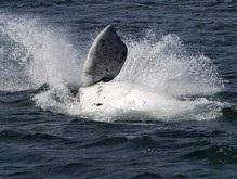 Ученые во имя науки истребили тысячи китов