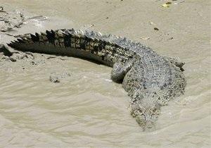 В ЮАР с фермы сбежали 15 тысяч крокодилов