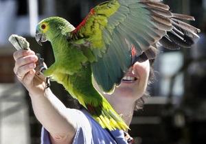 В Великобритании попугай прогнал воров из зоомагазина
