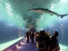 В Венгрии непорочная акула родила детеныша