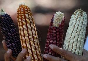 Украина может стать крупнейшим экспортером кукурузы в мире
