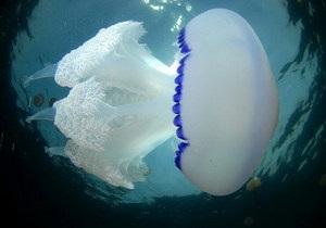 На пляжах Никарагуа отдыхающих атаковали медузы