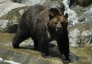 В Киевском зоопарке появится самый большой медвежатник в Европе