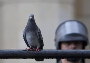 Женщина обвинила голубя в преследовании