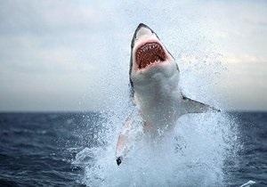 В Австралии пожилая женщина голыми руками отбилась от акулы