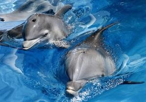 В Минобороны опровергли информацию о побеге дельфинов с военной базы