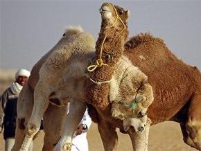 Семье убитого сотрудника ООН предоставят 100 верблюдиц в качестве компенсации