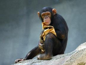 Умение вдевать нитку в иголку сделало человека слабее шимпанзе - ученые