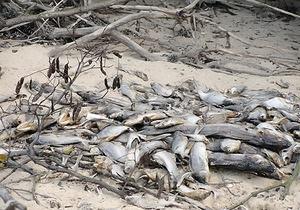 В Голосеевском районе Киева на берегу озера обнаружили сотни мертвых рыб