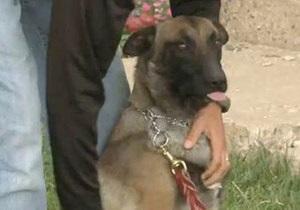 В американском городке после отставки шерифа единственным полицейским стал пес
