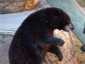 В России маршрутка сбила медведя