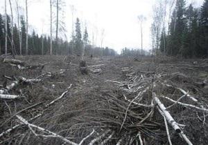 Защитники Химкинского леса обнаружили новые вырубки