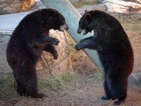 Работница российского зоопарка украла у медведя еду