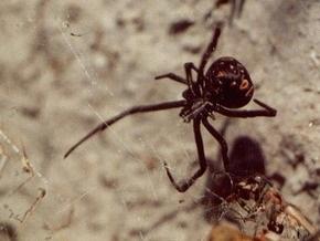 В Херсонской области от укусов пауков пострадало еще два человека