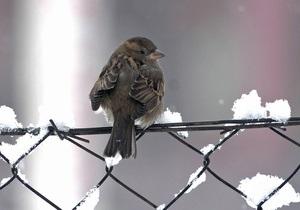 Новости Киева - непогода в Украине: В Киеве снегопад сорвал праздник встречи птиц