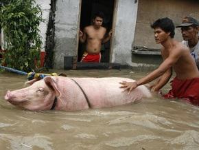 Фотогалерея: Тайфун разрушил жизнь на Филиппинах